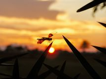 Dragonfly sitting in the foreground, sunset in the background