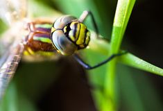 Dragonfly sitting on the green grass stock image