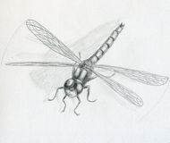 Dragonfly - sketch Stock Images