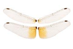 dragonfly skrzydła Zdjęcia Stock