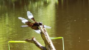 Dragonfly Sparkling In The Sun stock image