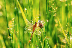 Dragonfly and spider Royalty Free Stock Photo