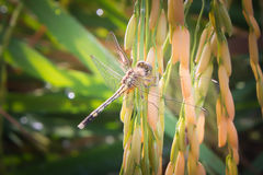 Dragonfly spike Stock Photo