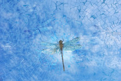 Dragonfly through splitting glass. A Dragonfly breaks out to the liberty of the sky, through shattering glass, with glass made dragonflies surrounding him Stock Image