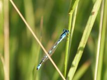 Dragonfly on Stem Stock Photo