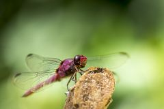 Dragonfly on stick Stock Photos
