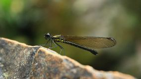 Dragonfly on stone stock footage