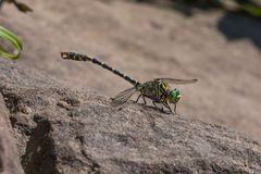 Dragonfly on stone basks royalty free stock images