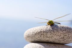 Dragonfly & stones. After global pollution there will be no flower where dragonflies could sit. Only cold stones Stock Image