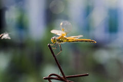 Dragonfly in the sun Stock Photo