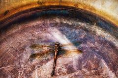 dragonfly tło metalu groszak Obrazy Stock