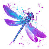 Dragonfly T-shirt graphics, dragonfly illustration with splash w Stock Photos