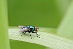 dragonfly trawa Zdjęcie Stock