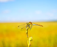 Dragonfly on tree branch. In summer stock photography