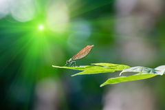 Dragonfly. On the tree branch Stock Photos