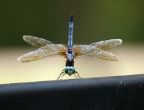Dragonfly on truck Stock Image