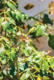 Dragonfly, turtledove background. Unit isolate Royalty Free Stock Photo