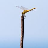Dragonfly on a twig Stock Photos