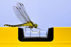 Dragonfly (Western Clubtail) attracted by a yellow spirit level Royalty Free Stock Photography