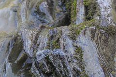 Dragonfly on wet stones in Lago-Naki royalty free stock photography
