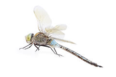 Dragonfly on white Stock Image