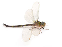 Dragonfly. On  a white background Stock Images
