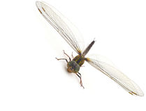 Dragonfly. On a white background Stock Photos