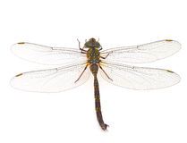 Dragonfly. On a white background Stock Image