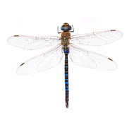 Dragonfly on a white background. Blue dragonfly on a white background Royalty Free Stock Photos