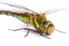 Dragonfly on a white background. Isolate. Close-up Stock Images