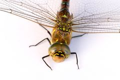 Dragonfly on a white background. Isolate. Close-up Stock Photo