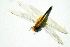 Dragonfly on white wall. Background Stock Photos