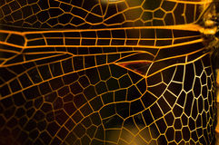 Dragonfly wing. Macro shot of a dragonfly wing showing the veins Stock Photo