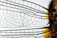 Dragonfly wing Royalty Free Stock Image