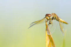 Dragonfly wing, middle wing, get some air and sunlight atop beau. Tiful grass stock image