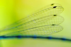 Dragonfly wings royalty free stock photos