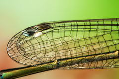 Dragonfly wings. High magnification of dragonfly transparent and very fragile wing details, with colorful background Royalty Free Stock Photos