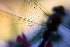 Dragonfly wings. Artistic interpretation of dragon fly wings, closeup stock photos