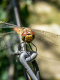 Dragonfly on wire Royalty Free Stock Photo