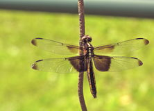 Dragonfly on wire closeup macrophotography Stock Photo