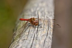 Dragonfly on a wooden bar Stock Photos