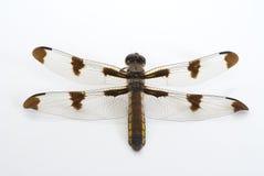 dragonfly złoty Obraz Royalty Free