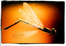Dragonfly2 Stockbilder