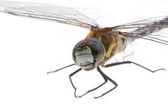 Dragonflye Royalty Free Stock Photography