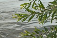 Dragonflys над рекой Стоковые Изображения RF