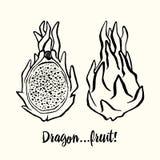 Dragonfruit lub Pitaya Pociągany ręcznie atrament ilustracja Zdjęcie Stock