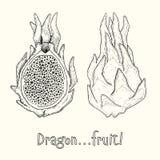 Dragonfruit lub Pitaya Pociągany ręcznie atramentu wektoru ilustracja Fotografia Stock