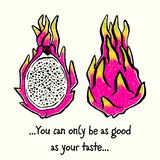 Dragonfruit ou Pitaya Ilustração desenhado à mão da tinta ilustração royalty free