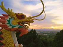 Dragons breathing fire. Golden Dragon spewing flames are among the blue sky Royalty Free Stock Images