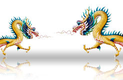 Dragons fly on white glaze background Stock Images
